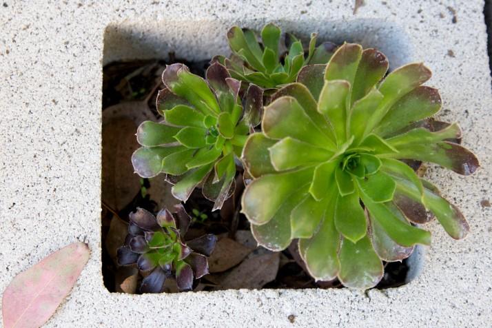 succulent_3.jpg
